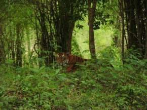 bannerghatta-national-park-bangalore