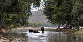 galibore-fishing-camp, bheemeshwari