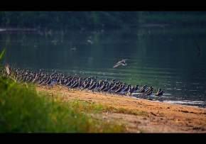 kadalundi-wildlife-sanctuary-kozhikode