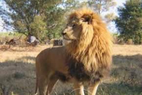 lions-park, kozhikode