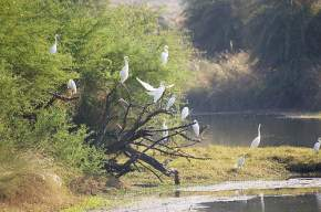 attractions-Van-Vihar-National-Park-Bhopal