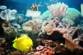 attractions-Fish-Aquarium-Bhopal