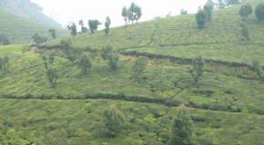 attractions--Coonoor