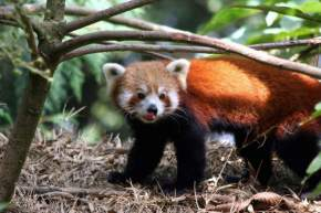 Padma Naidu Himalayan Zoological Park Darjeeling, Darjeeling