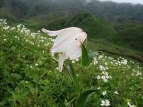 khonghampat-orchidarium-imphal