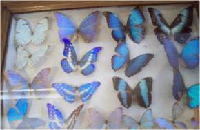 butterfly-museum, shillong
