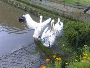 lady-hydari-park, shillong