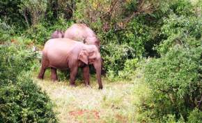 chinnar-wildlife-sanctuary, munnar
