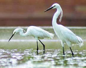 attractions-Salim-Ali-Bird-Sanctuary-Munnar
