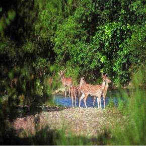 barda-hills-wildlife-sanctuary, porbandar