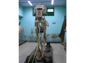 natural-history-museum, trivandrum
