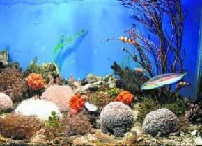 marine-aquarium, trivandrum