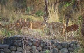 malsi-deer-park, dehradun