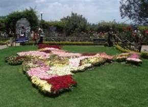 rose-garden, saputara