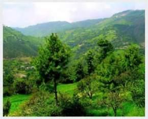 prospect-hill, shimla