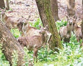 dachigam-national-park, srinagar