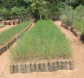 forest-nursery, saputara