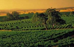 Barossa Valley, Australia