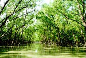 attractions-Sundarbans-Bangladesh