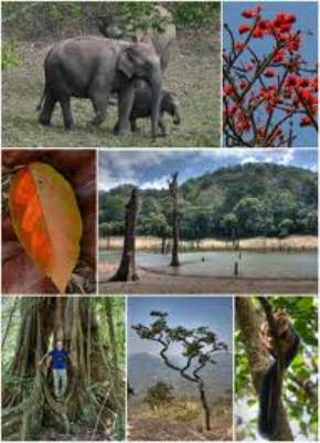 attractions--Thekkady
