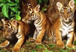 periyar-tiger-reserve, thekkady