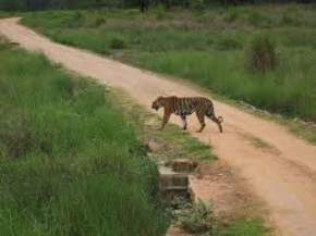 achanakmar-wildlife-sanctuary, bilaspur