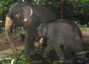 puthenkulam-elephant-village, kollam