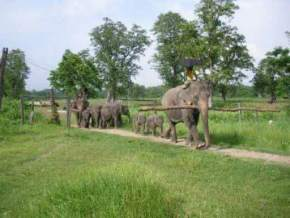 chitwan-national-park, nepal