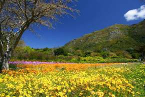 kirstenbosch-national-botanical-garden, south-africa