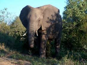 attractions-Kruger-National-Park-South-Africa