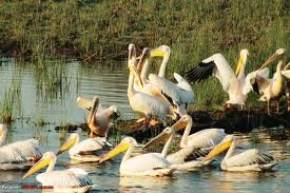 khijadia-bird-sanctuary, jamnagar