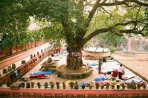 attractions-Bodhi-Tree-Bodh-Gaya