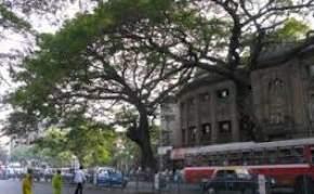rajayatna-tree, bodh-gaya