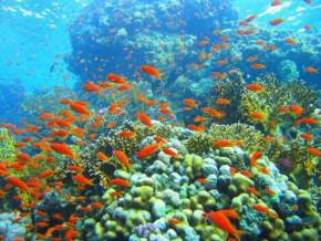 red-sea-coral-reefs, egypt