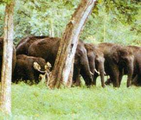 annamalai-wildlife-sanctuary, coimbatore