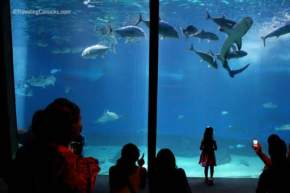 attractions-Underwater-World-Aquarium-New-Zealand