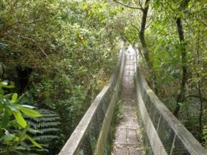 attractions-Glenfalloch-Woodland-Gardens-New-Zealand