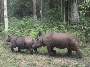 rhino-conservation-center, malaysia