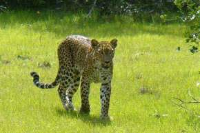 attractions-Wilpattu-National-Park-Sri-Lanka