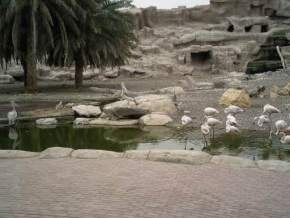 sharjah-arabian-wildlife-center, uae