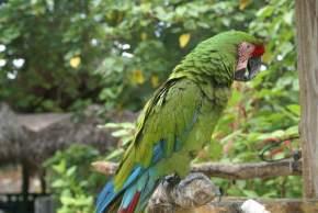 ardastra-zoo-bahamas