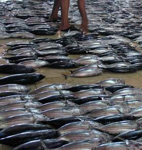 male-fish-market-maldives