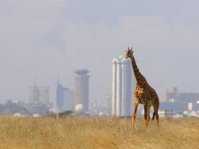 nairobi-national-park, kenya
