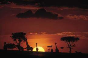 attractions-Masai-Mara-Kenya