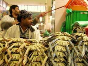 Fish Market Kuwait - Places to Visit in Kuwait