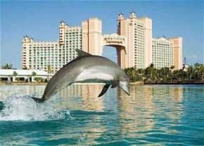 dolphin-cay-and-marine-habitats, bahamas