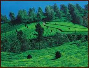 attractions--Kausani
