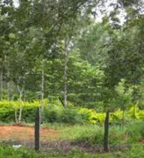 government-herbal-farm, yelagiri