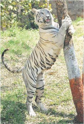 attractions-Gwalior-Zoo-Gwalior