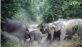 rajaji-national-park-haridwar
